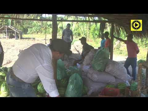 AGRONEGÓCIO: Ex-alunos da CFR de Itapecuru mudam realidade de suas famílias